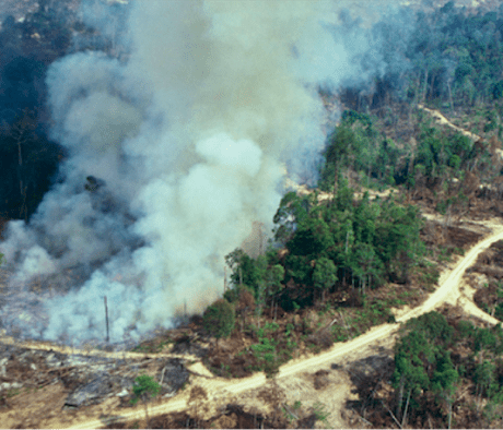 rainforest carbon emissions